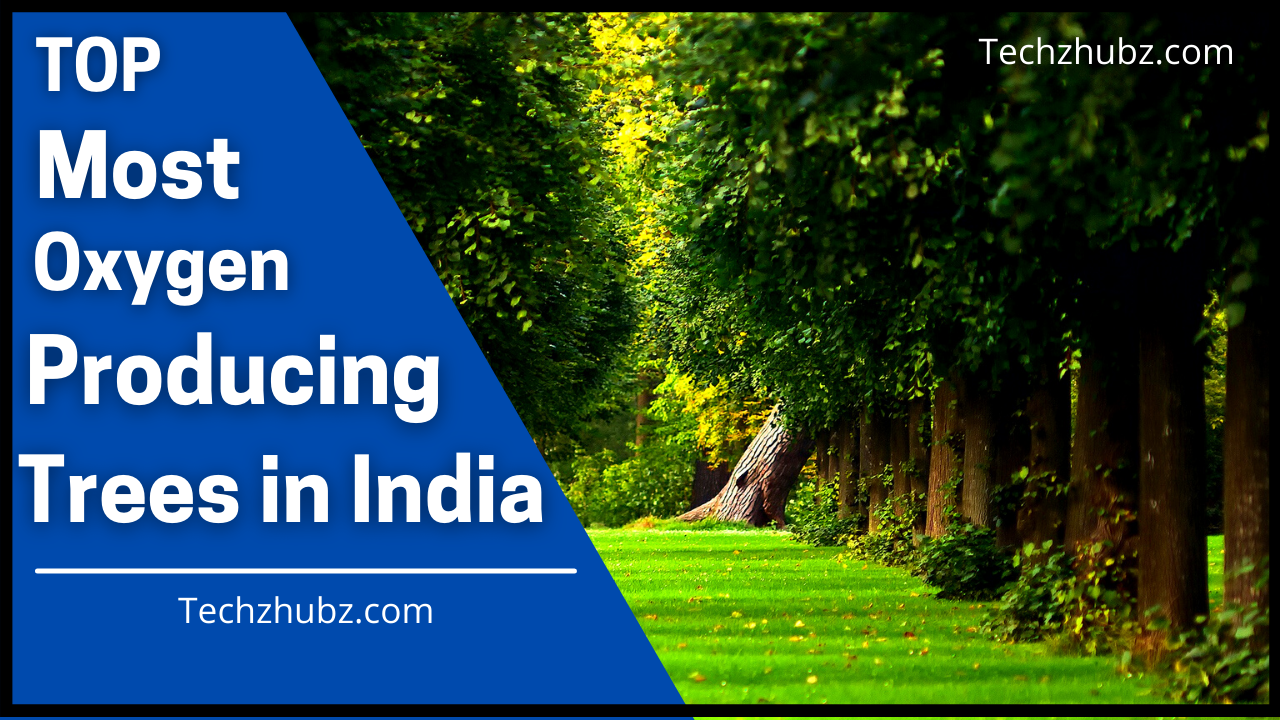 Most Oxygen Producing Trees in India